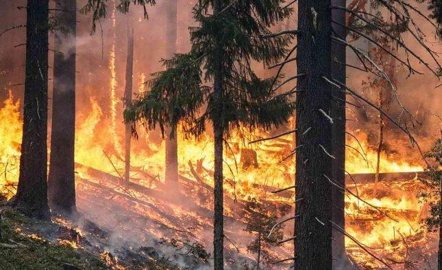 Devastadores incendios forestales sin precedentes en la Amazonía a causa de la deforestación